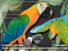 Macaw,Parrot,hybrid