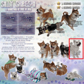 JIAN Silly Shibes II 8. Cream Companion Pup BOX