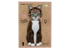 KittyCatS Box - American Shorthair - Brown & White Patch