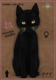 KittyCatS Box - MP-Russian - Black-Bronze Foxie-G