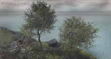 LB Wild Oak Tree Animated 4 Seasons