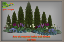 Lady's Garden - Row of evergreen bushes with flowers 34 Prim