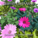 Flowers - Spanish Daisy (Osteospermum sp.) - Full Perm Mesh - LI=1