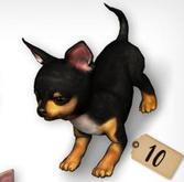 [Rezz Room] Pack Chihuahua  Playing - Gacha Set Chihuahua #10