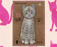 KittyCatS Box - F Toyger Snow Prismatic 3T