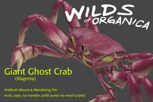 [ WoO ] Giant Ghost Crab (Magenta)