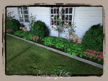 EV - Flower Bed Boxwood