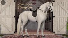 Cheval D'or / TeeglePet Pegasus / Dressage Set.
