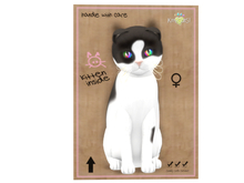 KittyCatS Box - 9 T - F - Chateau Cat - Cocoa & White No. 2