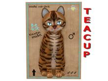 KittyCatS Box - 6 T - M - Toyger - Caramel - Teacup