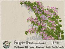 Konoha -Bougainvillea Aiko v.018