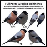 Full Perm Eurasian Bullfinches - Boxed
