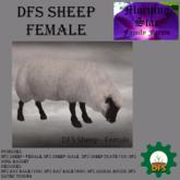 DFS Sheep - Female