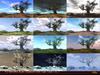 !Skifija 12 Months Auto Season Old Oak Tree v.0.2
