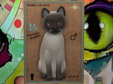 ♂ MEGAPUSS!! - Tonkinese - Blue Mink - JN - KittyCats New Born Kitten