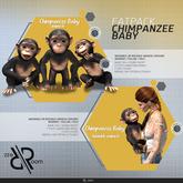 [Rezz Room] Box FATPACK Chimpanzee Baby