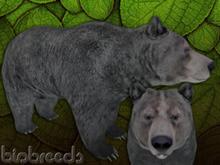 BB Bear Box Female Grey