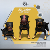 [Rezz Room] Rottweiler  Adult Animesh (Companion)