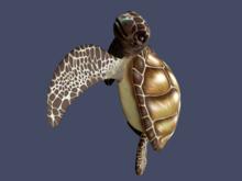 OSMIA - Aloha.Gacha.Turtle - On the Leg (WEAR ME) - Beige