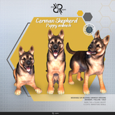[Rezz Room] Box German Shepherd Puppy (Companion)