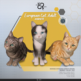 [Rezz Room] Box European Cat Adult Animesh (Companion)