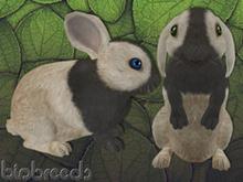 BB Bunny Box - kanin - Cream - female