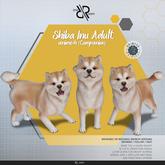 [Rezz Room] Box Shiba Inu Adult Animesh (Companion)