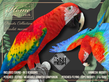Parrot, Scarlet Macaw