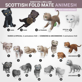 SEmotion Libellune Scottish Fold Mate Animesh #13