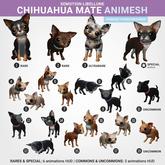 SEmotion Libellune Chihuahua Mate Animesh #19 UNCOMMON