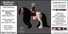 *E* RealHorse Rideable Mini Gypsy Vanner Baroque [Add & Click]