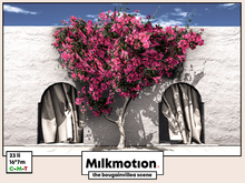 (Milk Motion) The bougainvillea scene
