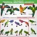 SEmotion Libellune Tropical Aratinga Animesh - Common Set