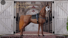 Cheval D'or / TeeglePet Arabian / Race Tack.