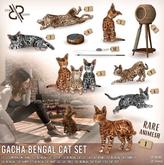 [Rezz Room] Box Bengal Cat Jump