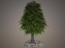 EV - Oak Tree