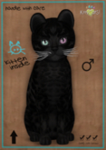 KittyCatS Box - Bengal - Black - Odyssey Sorbet