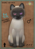 KittyCatS Box - Tonkinese - Blue Mink - Odyssey Magic