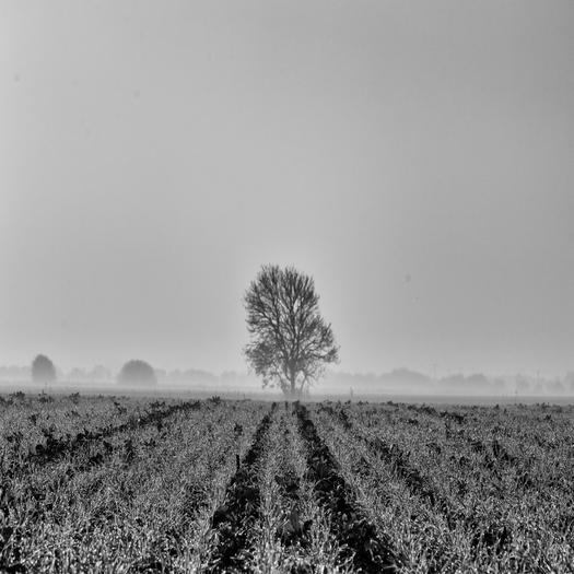 Far away Tree in fog.