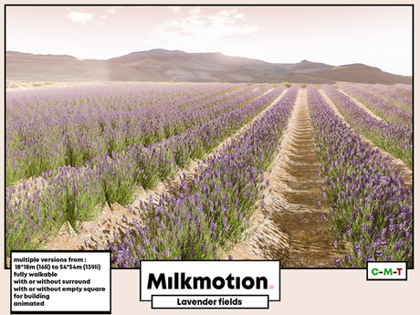 (Milk Motion) lavender fields