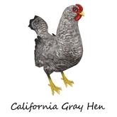 Barnyard Bird Nest California Gray Color Hope for Maleficent