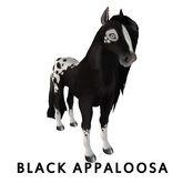 Black Appaloosa [Mare] Amaretto Bundle