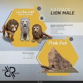 [Rezz Room] Box Lion Male FATPACK