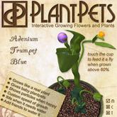 PlantPet Seed [Adenium Trumpet *Blue*]