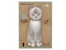 KittyCatS Box - 9 T - M - Burmilla - Lilac Shaded