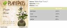 PlantPet Seed [Petite Rose *Ivory*]