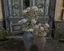 CJ Liberty Hydrangea in Vase 3in1