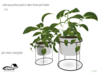 @home: colocasia potted plant wireframe pot holder