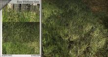 -Hisa- Flora Wildflower Grass
