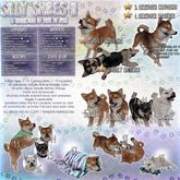 JIAN Silly Shibes II 11. Black and Tan Wander Pup BOX